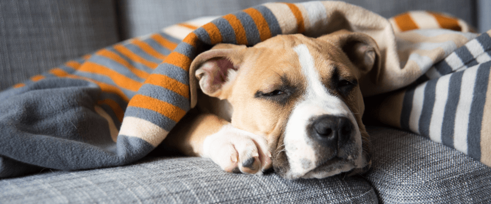 Sick Visits/Unwell Pets
