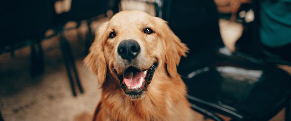 Wellness Care – Canine